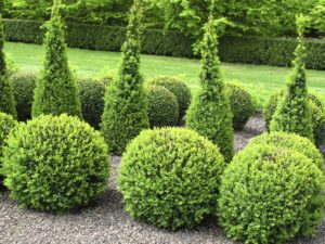 Pruning_Shrub_&_Tree_Shaping