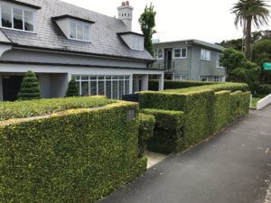 hedge_trimming_remuera