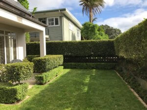 remuera-hedge_vic_ave